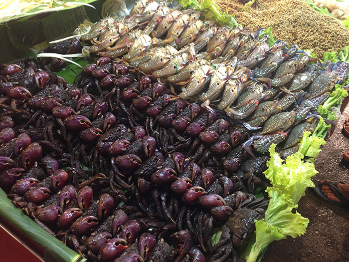 Crabes, Krabi, Thaïlande