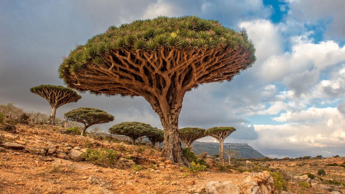 Plateau de Dixam, Socotra