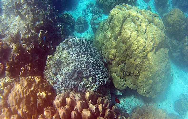 Plongée Thaïlande