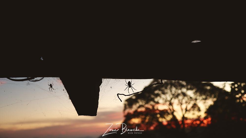 Araignée en Thaïlande