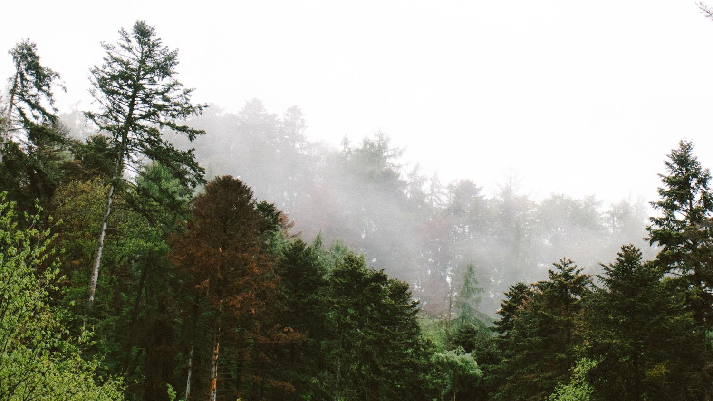 Massif des Vosges sous la brume