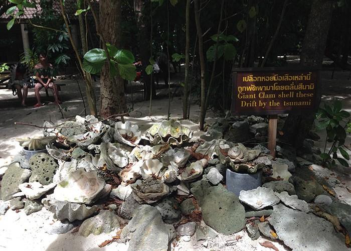 Les dégâts causés par un tsunami