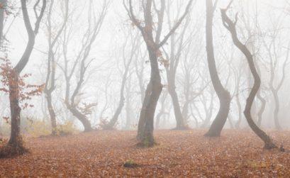 Forêt Hoia Baciu, Roumanie