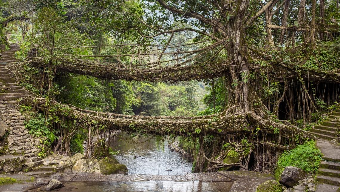 Pont au Meghalaya, Inde