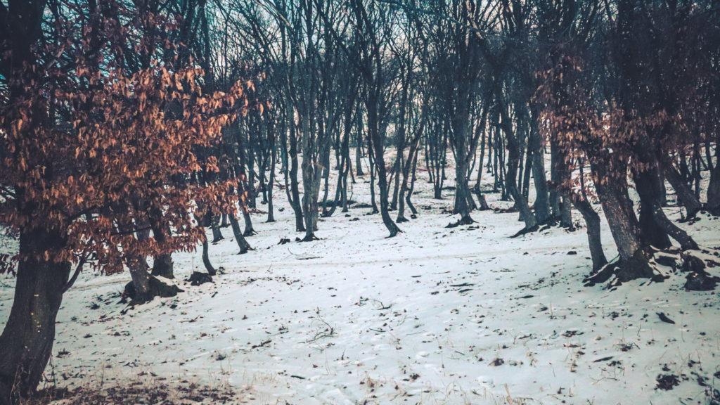 Vue d'ensemble de la forêt Hoia Baciu