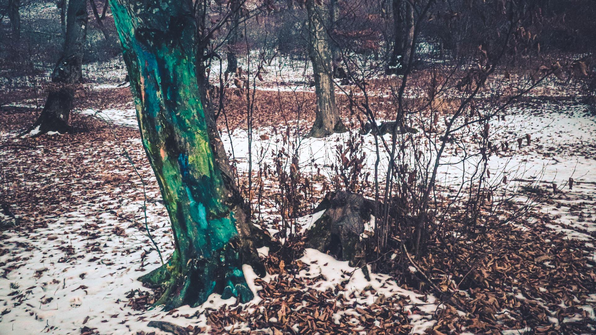 Arbre peint, forêt Hoia Baciu