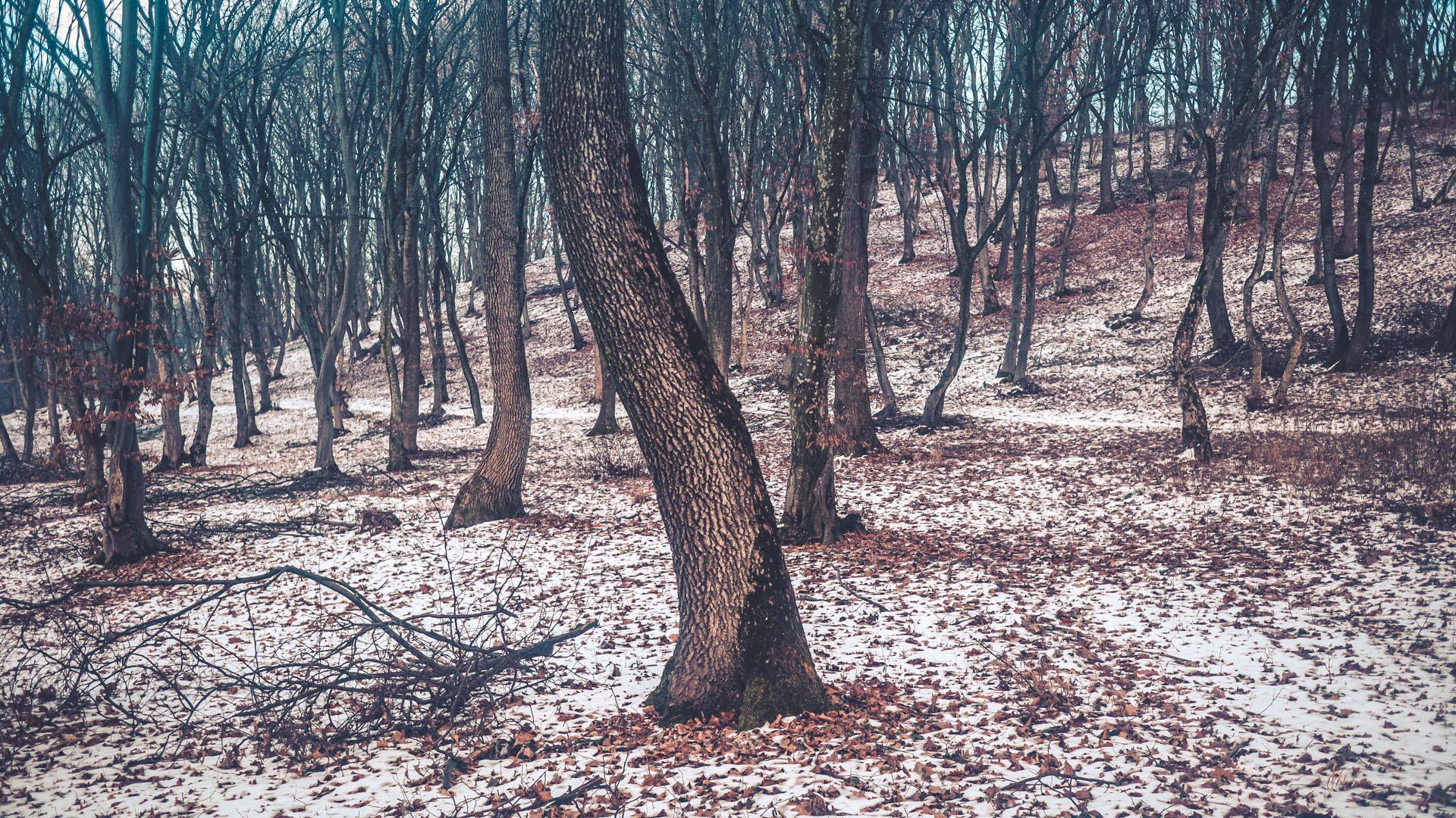 Un des arbres au tronc en spirale