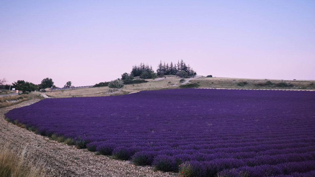 Crépuscule sur les champs de lavande de Ferrassières