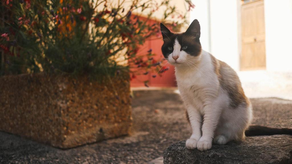 Partout où je vais, les chats prennent la pose !